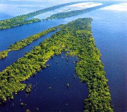 fotos-da-floresta-amazonica