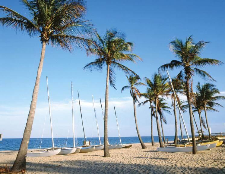 пальмы msmstudy