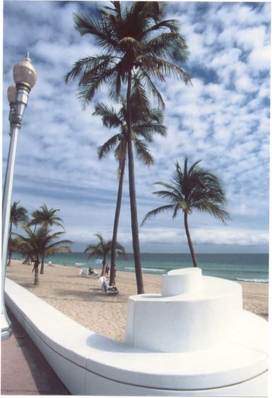 пальма msmstudy
