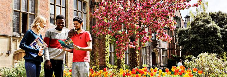 ребята учатся на фоне цветущего дерева msmstudy
