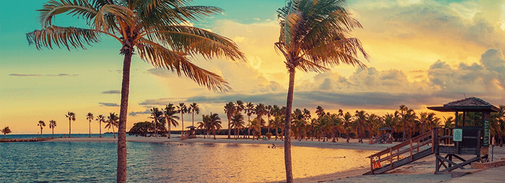 Набережная с пальмами msmstudy