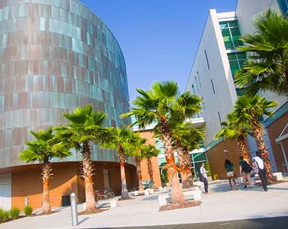 University of South Florida msmstudy
